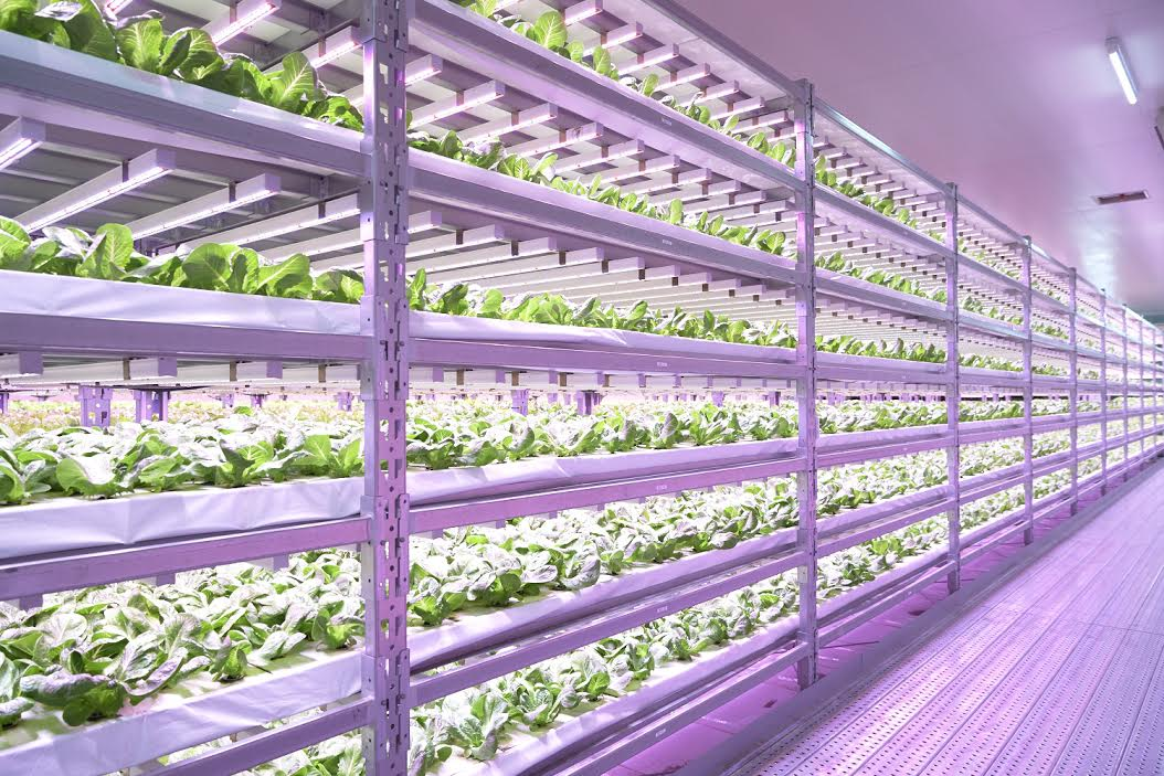 Philips Horticulture Led Solutions Verlichting Nl